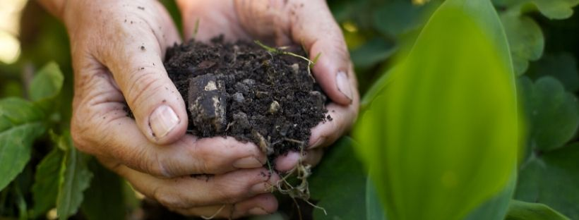 Rich Gardening Soil cupped in hands